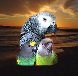 ABBA 1400 Bird Foods African Grey/ Senegal Food 5lbs Fresh F