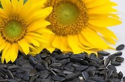 Peredovik Sunflower Seeds - The birds love these seeds!!! Gr