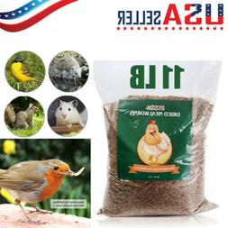 5lbs Bulk Dry Mealworms for Wild Birds Food Blue Bird Chicke
