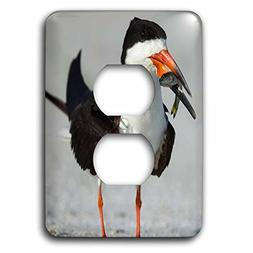 3dRose Danita Delimont - Bird - Black Skimmer, the winner wi