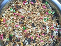 higgins Dynasty Vita Cockatiel fruits seed mix millet small