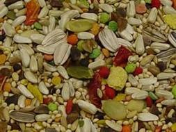Volkman Seed Featherglow Small Hookbill 4lb by Volkman Seed