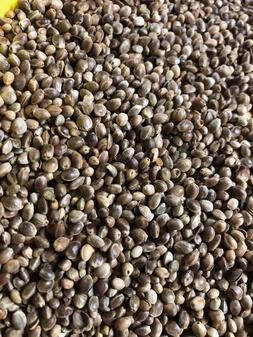 Hemp Seed 1+ pound Best bird food Doves Pigeons Love Birds C