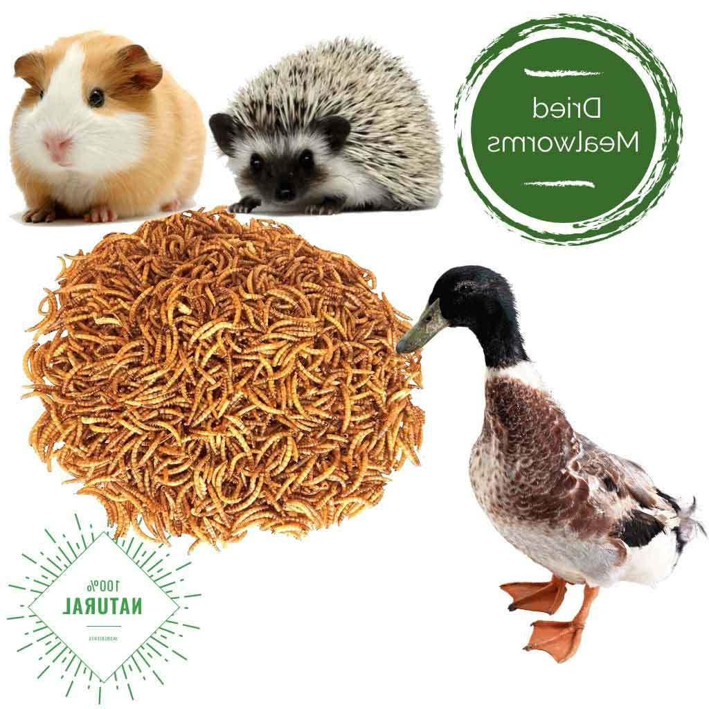 11Lbs Dried Mealworms for Wild Reptile Fish USA