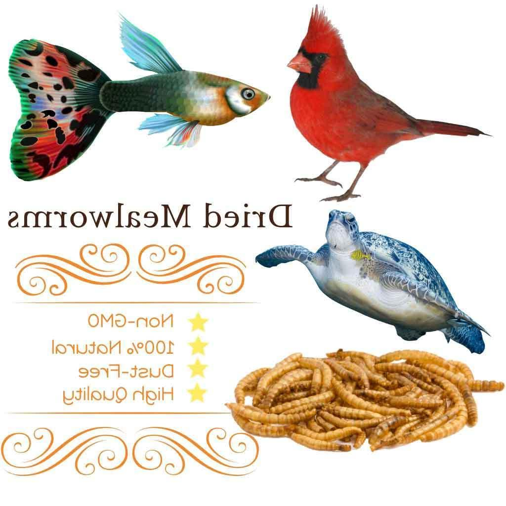 11Lbs Mealworms for Birds Reptile Ducks Food USA