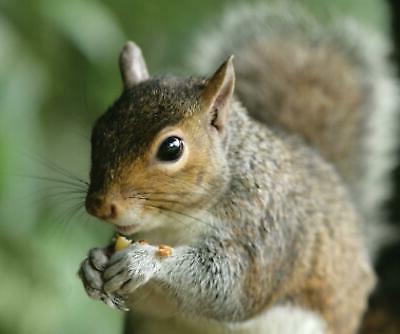 Audubon Park Critter Crunch Critter Food Squirrel Pounds