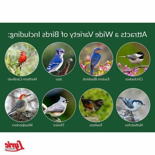 Lyric, Wild Bird lb, Birds