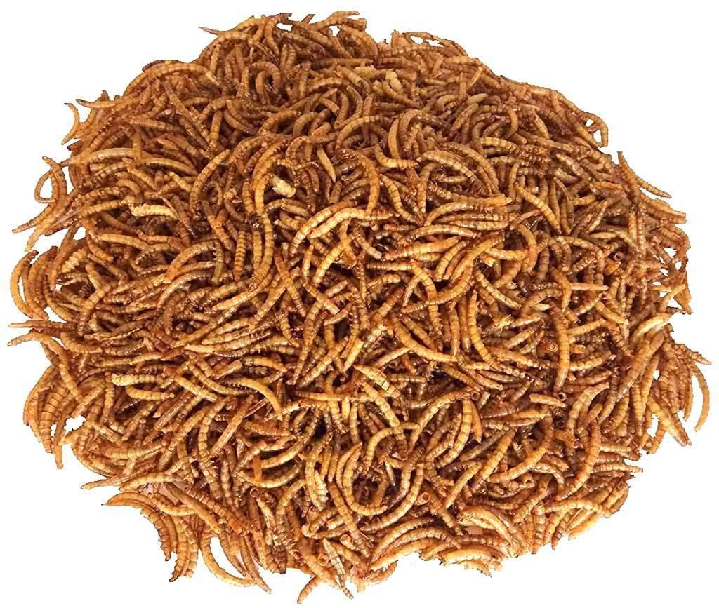 11Lbs Dried Mealworms for Reptile Ducks USA