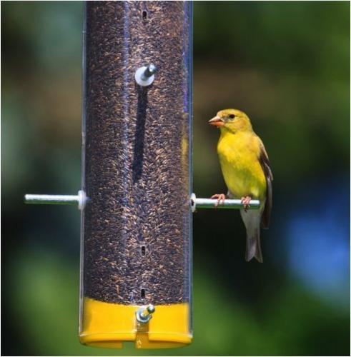 Wagner's 62053 Bird