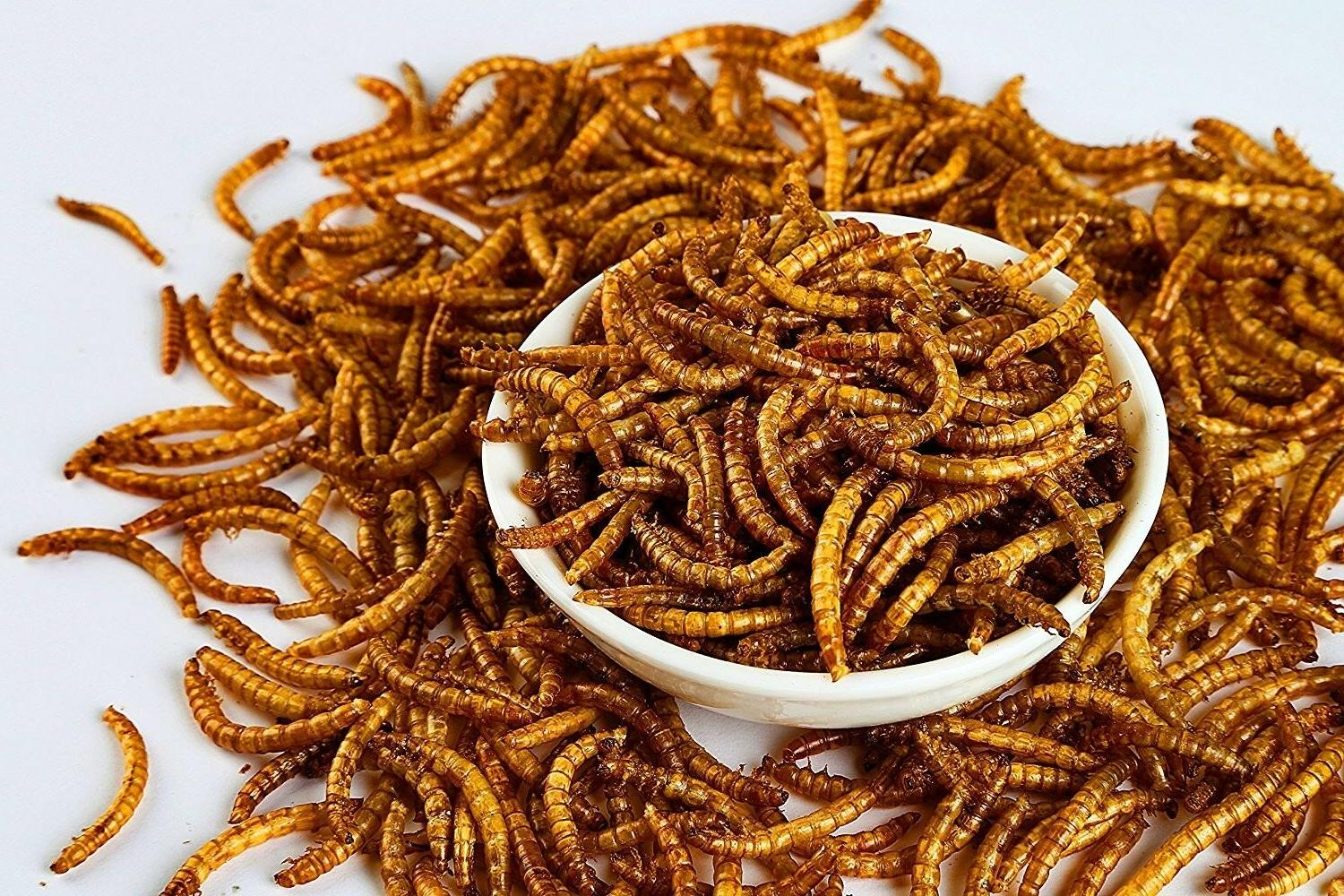 Dried Mealworms for Wild Birds Food Blue