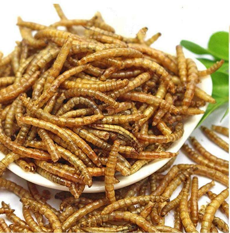 Non-GMO Mealworms for Chickens Fish