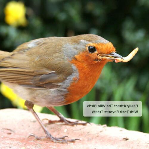 5lbs Bulk Dry Mealworms for Wild Birds Food Blue Bird Chicke