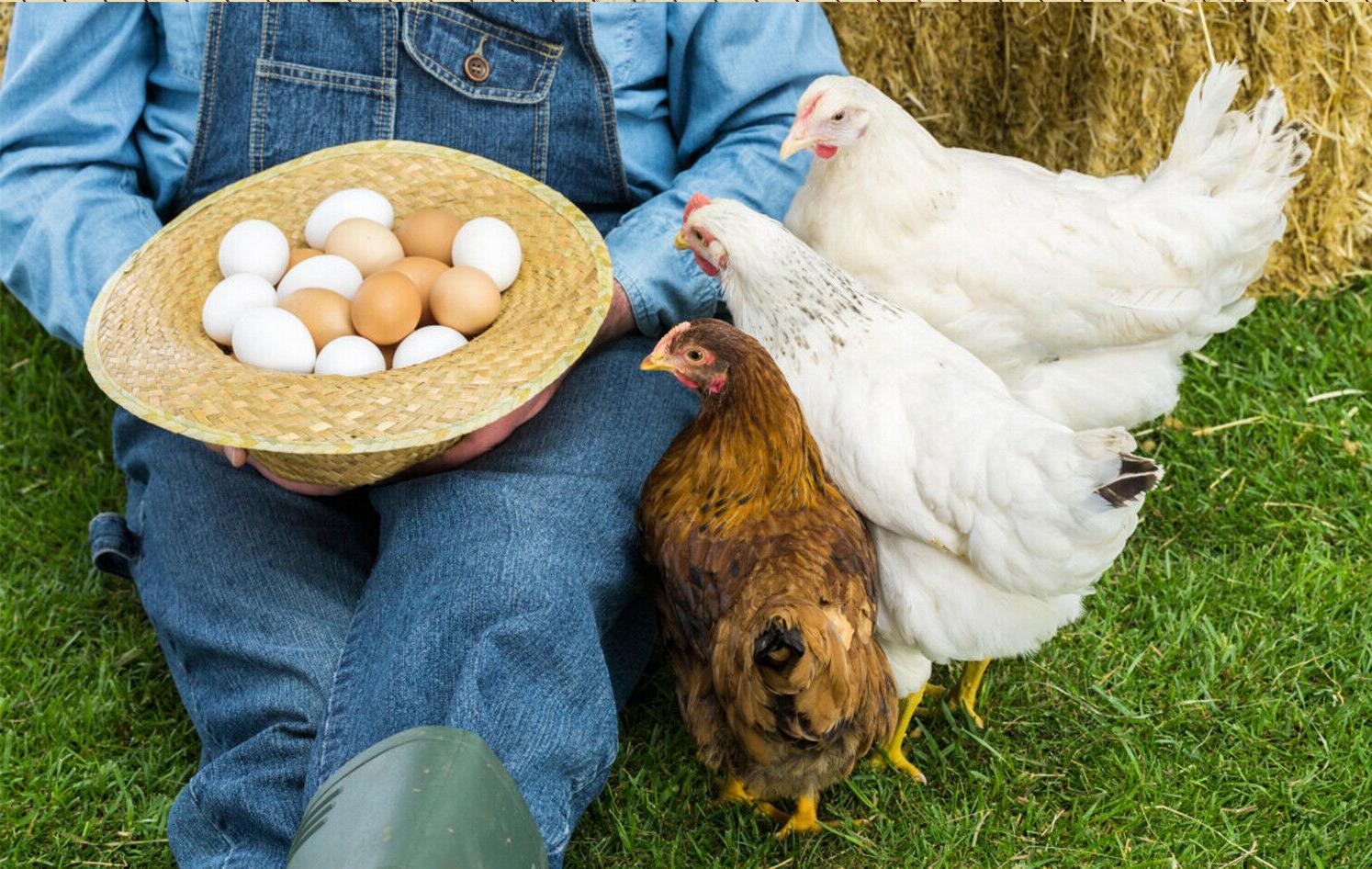 Non-GMO Bulk Food For Chicken,Bird,Turtle,Fish,Duck