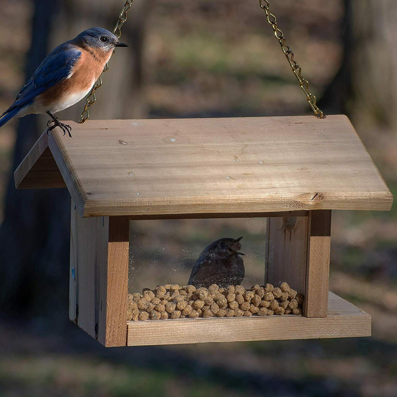 New Nuggets Wild Bird 6