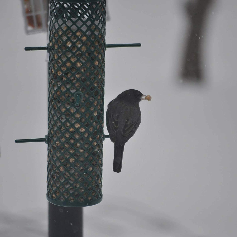 New Peanut Nuggets Bird Of 6 Made