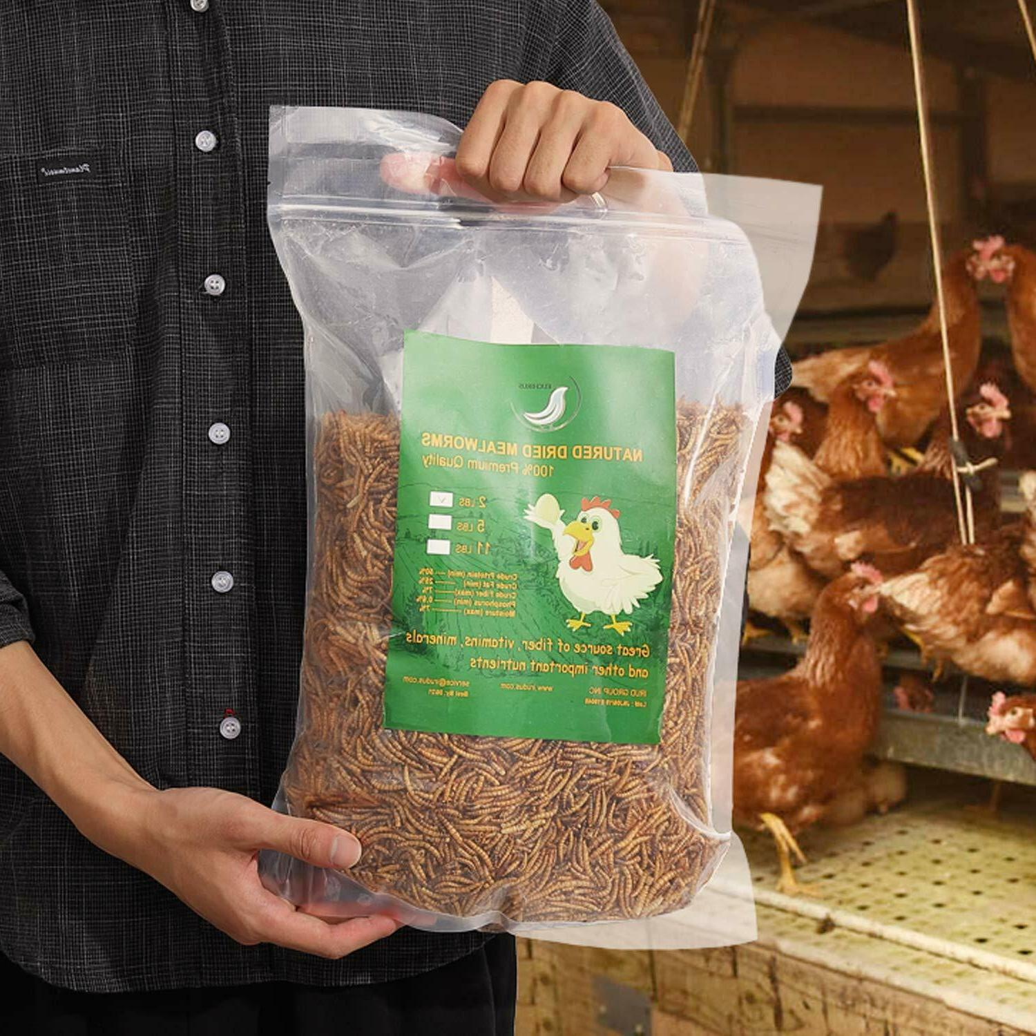non gmo dried mealworms fit birds chickens