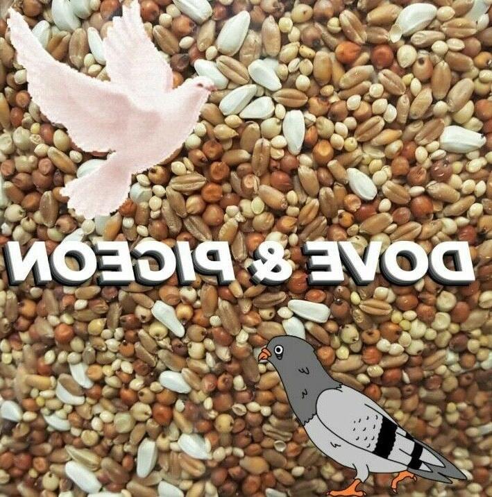 pigeon dove seed wild bird feed food