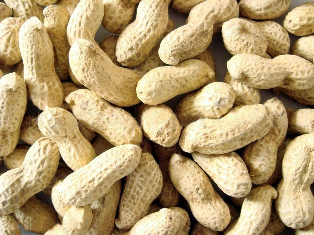 raw peanuts in shell bird food