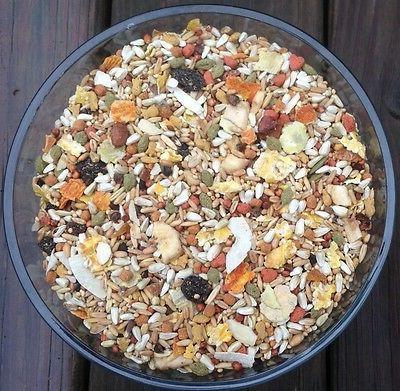 safflower cockatiel conure diet natural diet fruit