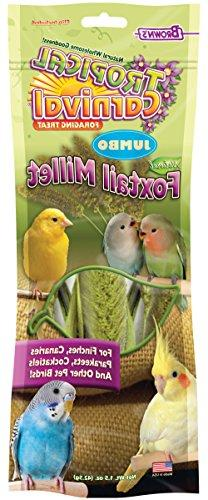 Tropical Carnival F.M. Brown's Natural Foxtail Millet for Fi