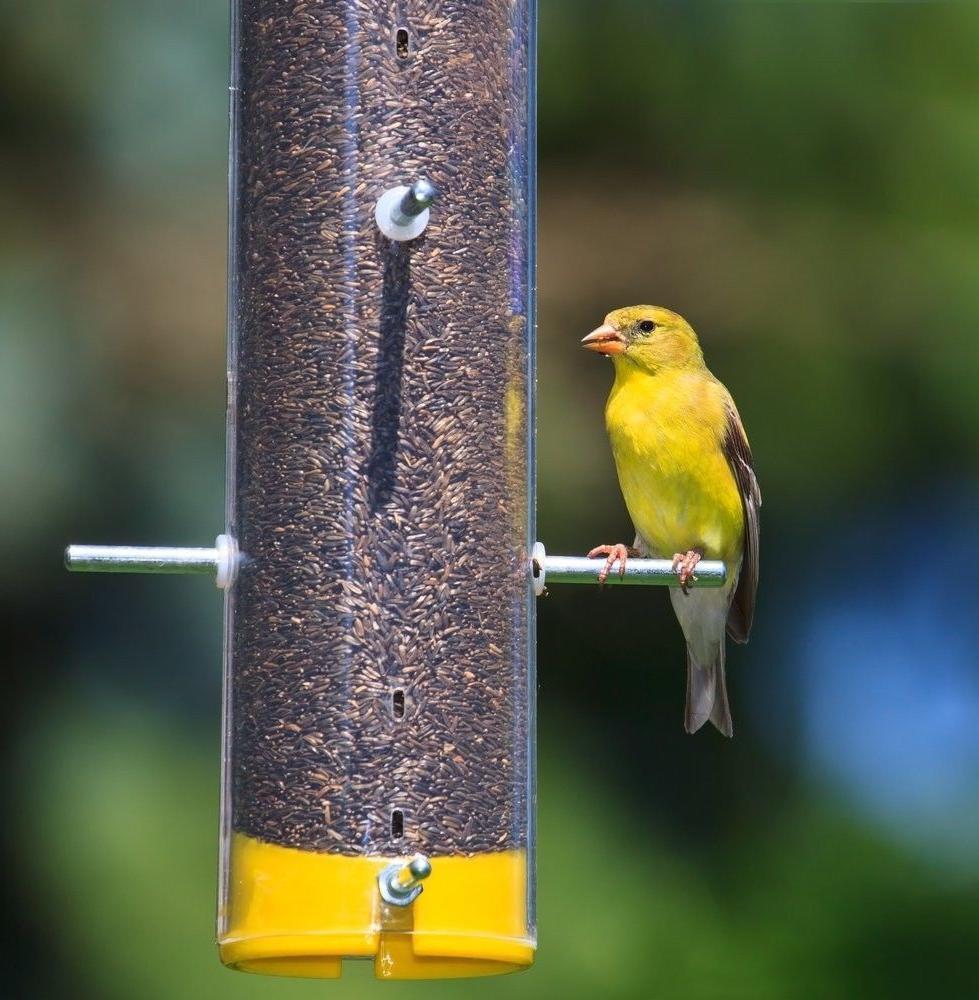 Wagner's Wild Bird Nurturing Food 62052 Nyjer Seed, 50