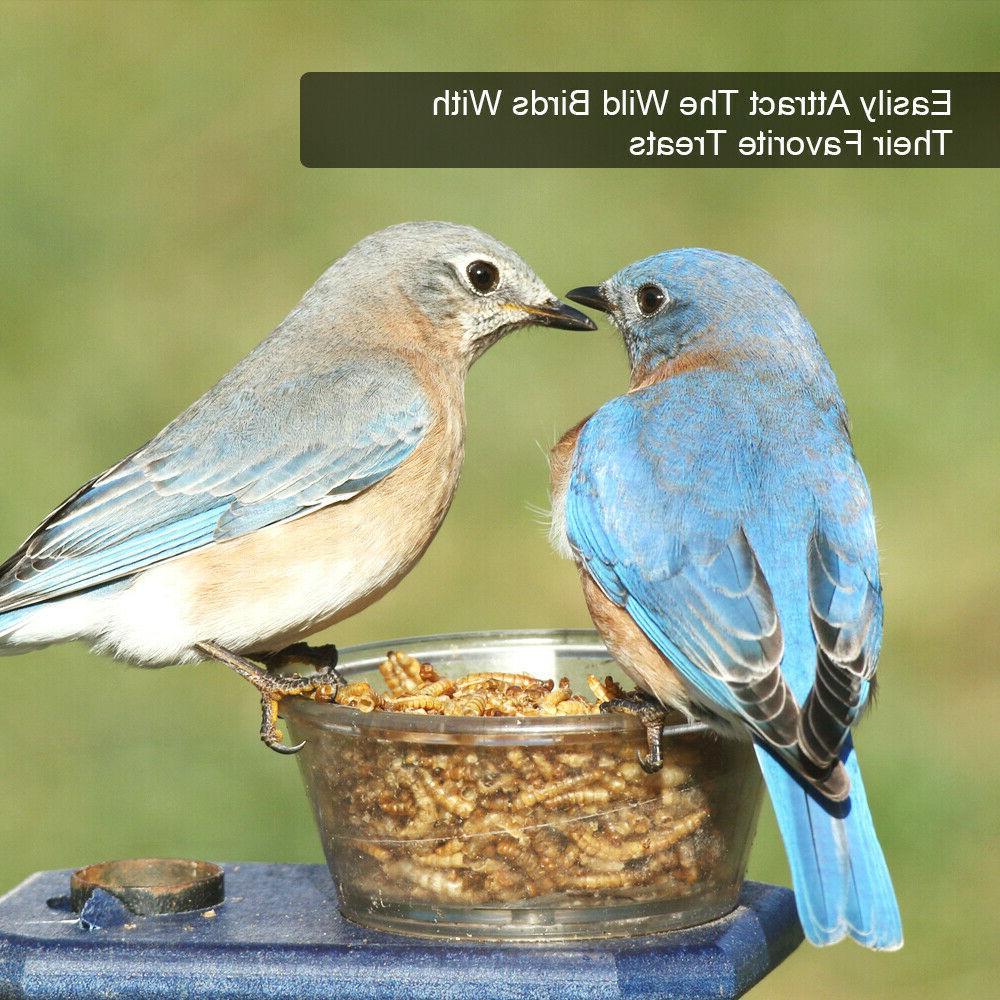 Wholesale Bulk for Birds Food Blue Treats