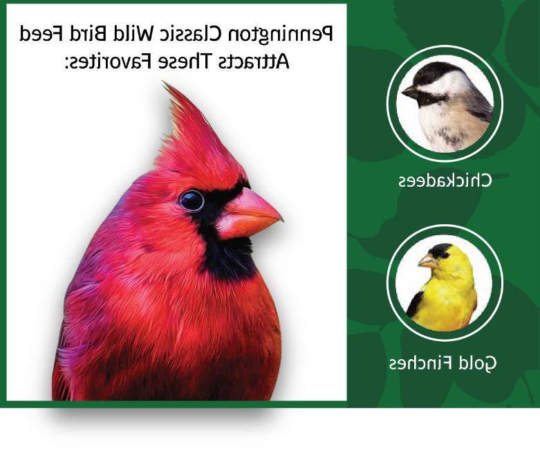 Wild Seed Mix Birder's Blend 40lb
