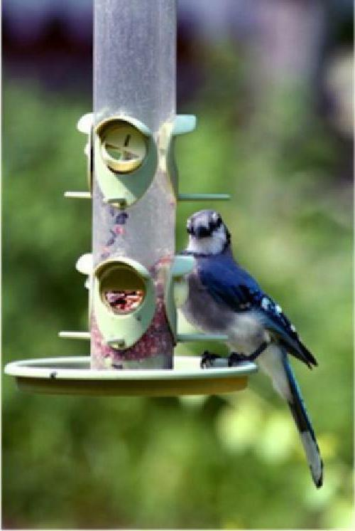 Wild Bird Food Wagner's 52004
