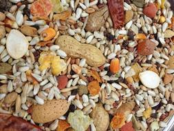 Higgins Safflower Gold Large Parrot Diet Bird Food Nut Fruit